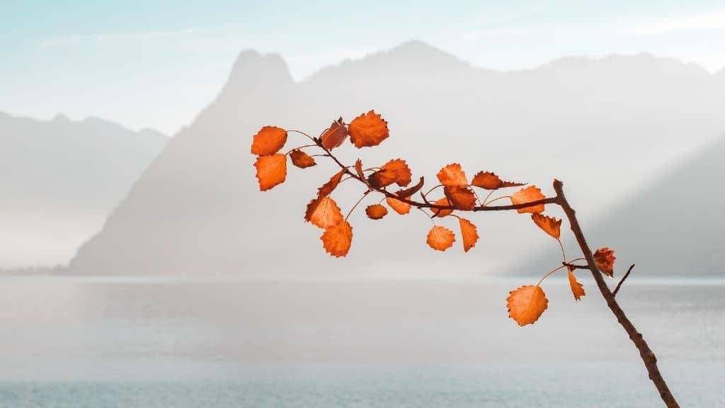 tree branch in front of water and hazy mountain